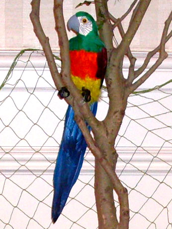 tropical parrot tree
