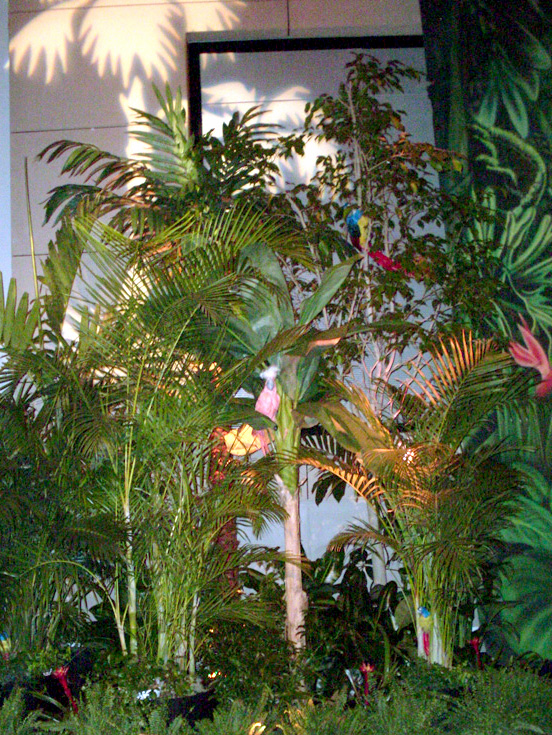 tropical palm tree fill foliage