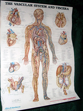 medical poster chart vascular system chart diagram paper