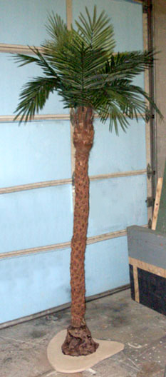 date palm tree tropical