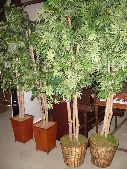 tree hardwood indoor topiary foliage indoor office potted trees medieval village market