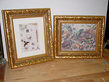 framed art insects frogs nature